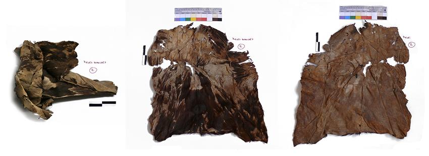 Conservación de pieles de mortajas. Cultura guanche. España (Universidad)